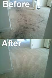 Before and After Carpet Cleaning in Mesa, AZ